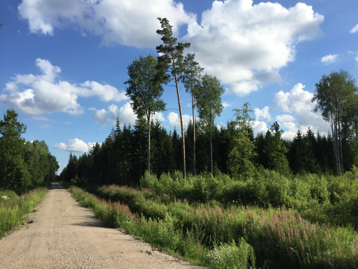Latvian countryside: forests and fields.